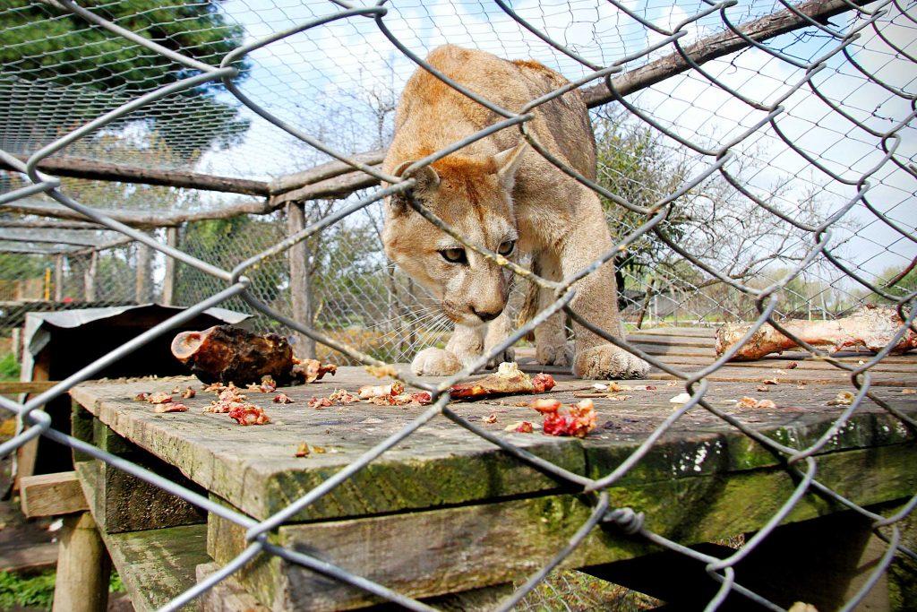 animales del parque de Quillón