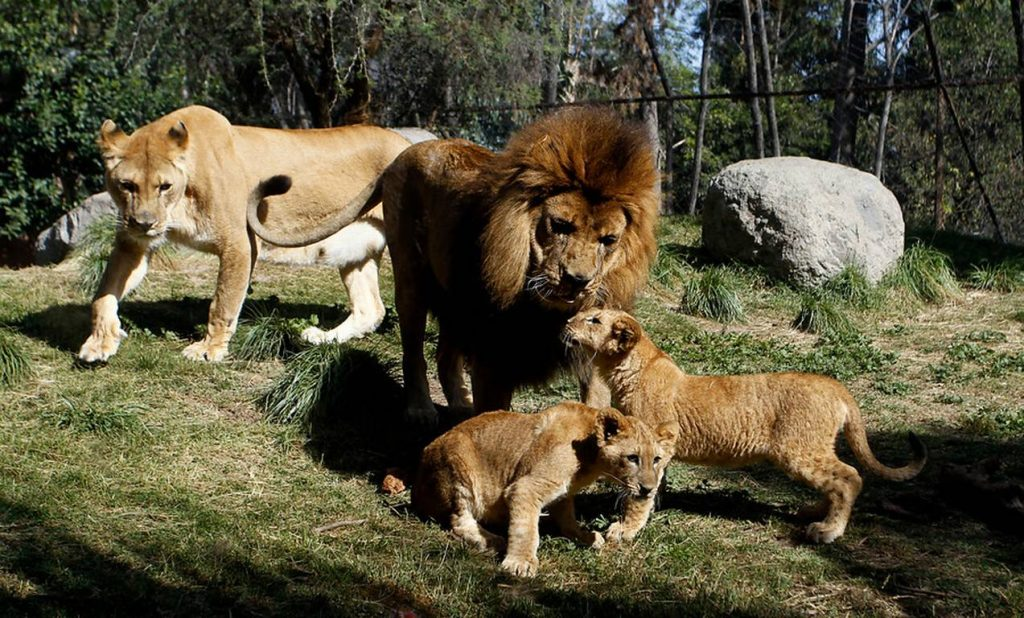 buin zoo chile
