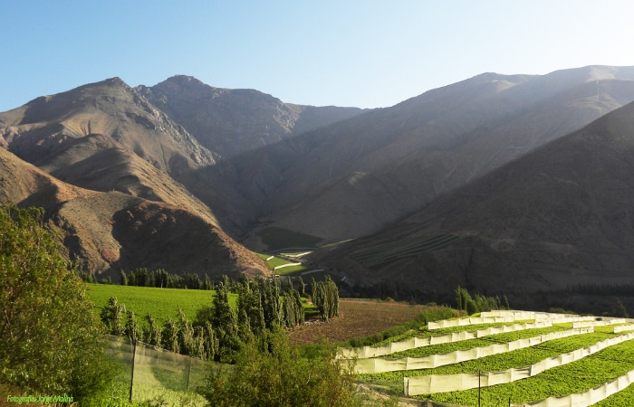 valle elqui paihuano